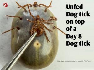 DogFemale_Unfed_vs_Day8_01
